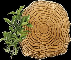 天然植物 サラシア