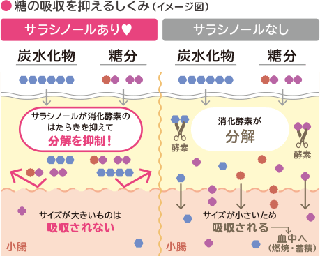 糖の吸収を抑える仕組み(イメージ図)